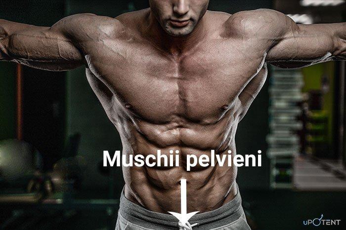 relaxați mușchii penisului)