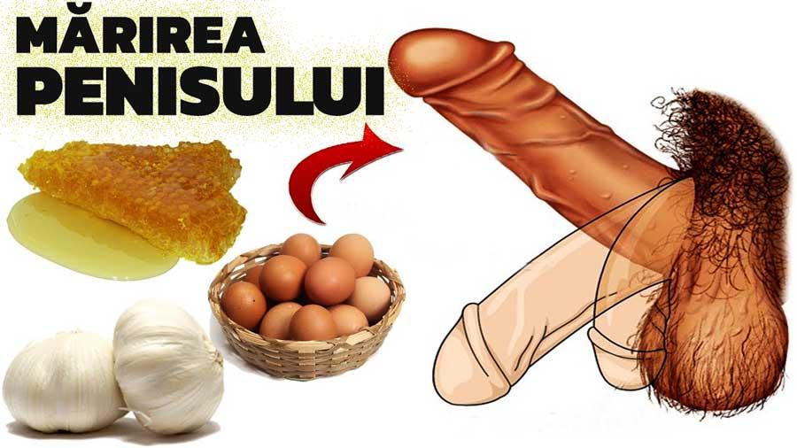 penisul se mărește în timpul erecției)