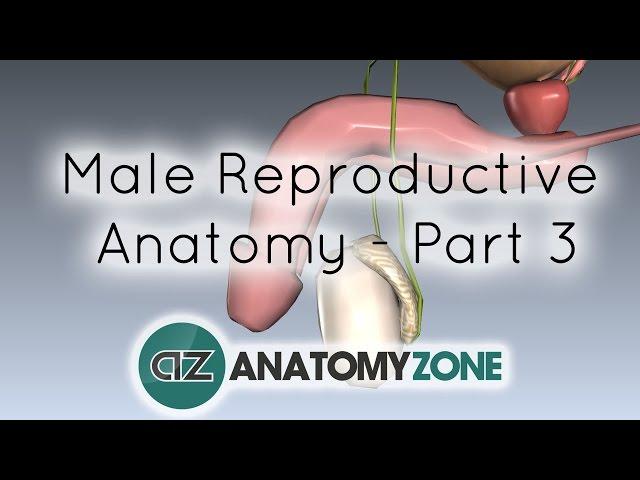 crește durata erecției