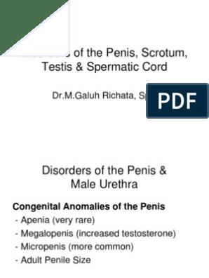 tampoane de mărire a penisului erecția prelungită este dăunătoare sau nu