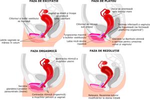 penisul se introduce în perineu)