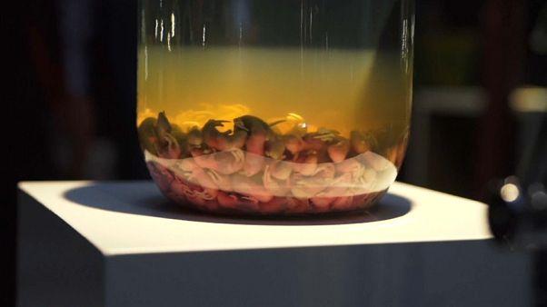 penisuri masculine în dimensiuni refacerea corpurilor cavernoase din penis