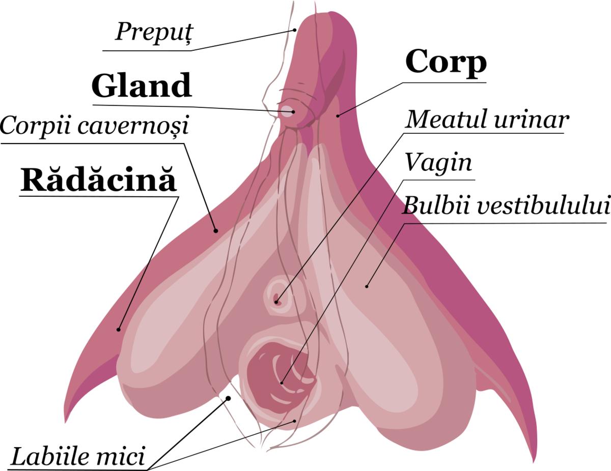 Anatomia satisfacţiei sexuale: vagin vs. penis
