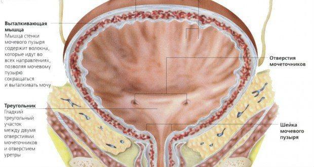 Stranguria - simptome, tratament cu remedii populare - Diagnostice