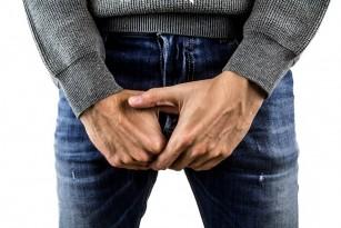 penisul bărbatului adult
