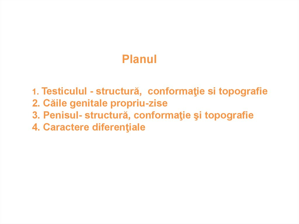 Organele genitale vizibile ale bărbatului