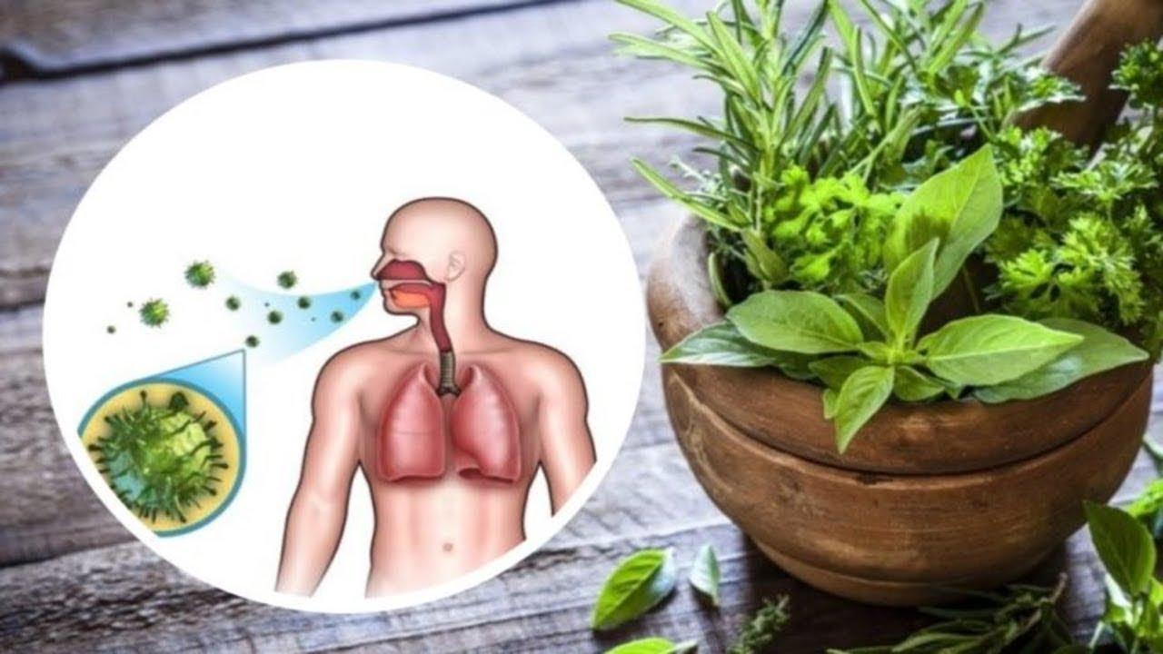 plante crescute de erecție cocoș al unui bărbat cu erecție