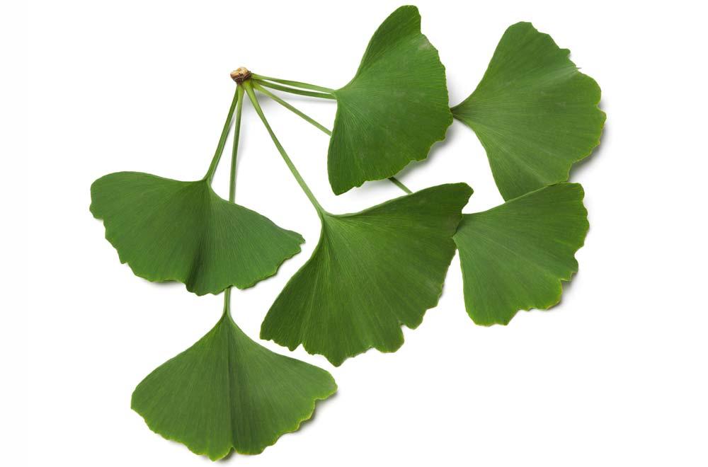 planta îmbunătățește erecția
