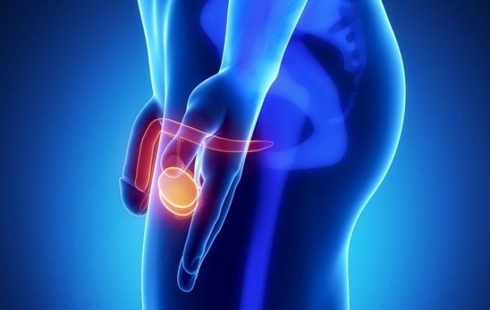 ligamentotomia penisului