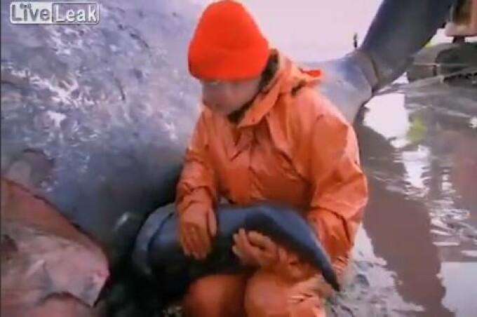 Mare balenă albă și ucigașă