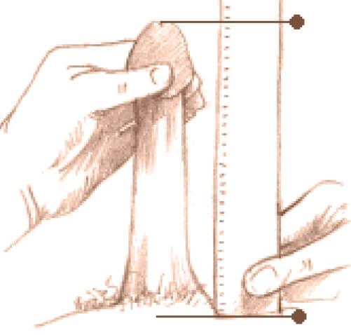 modul în care este determinată dimensiunea penisului