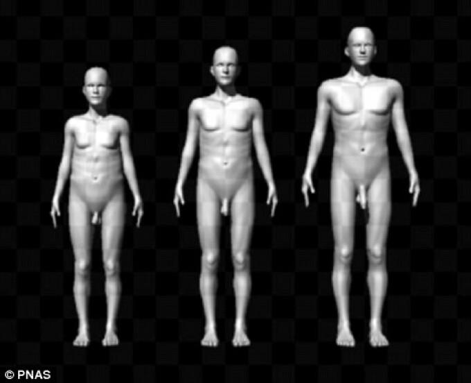 penisurile masculine ce dimensiuni au penisuri la femei