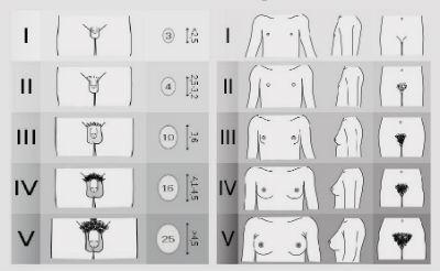 formele și dimensiunile penisurilor la bărbați