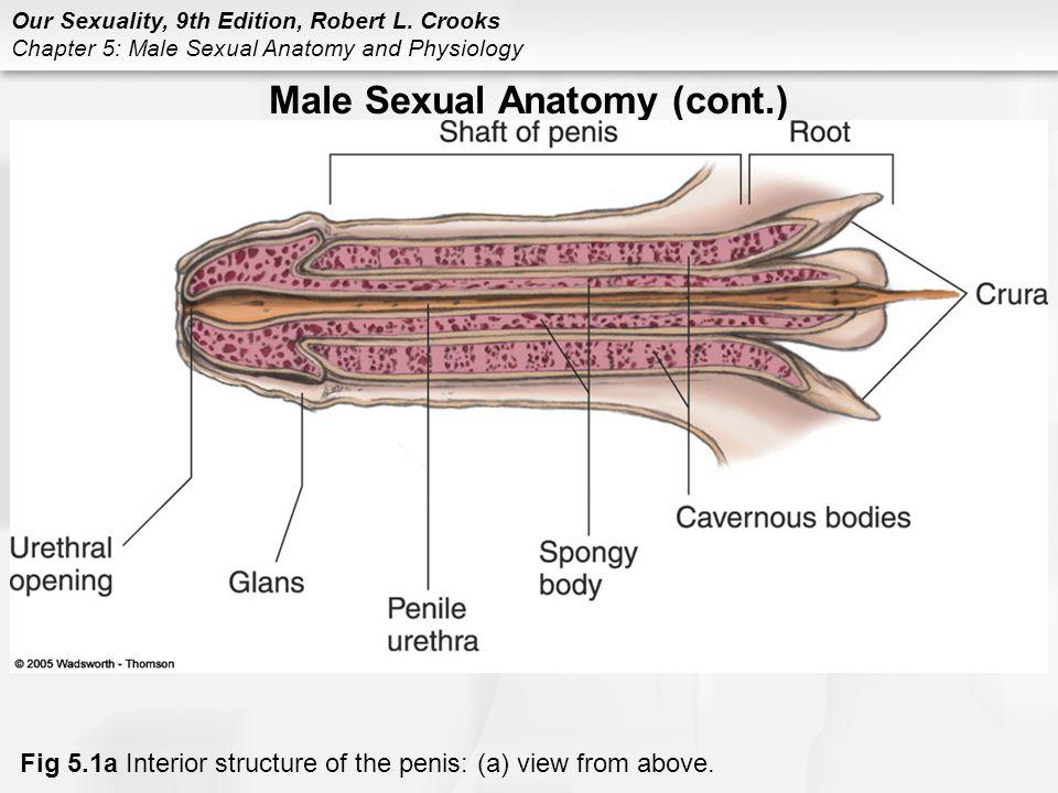 penis interior puteți mări penisul cu masaj