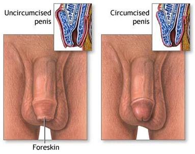 penisuri de băieți tineri
