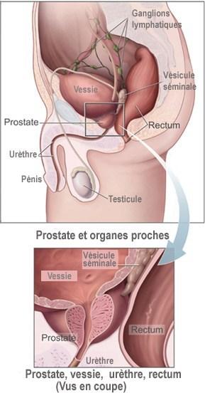 cum să experimentați o erecție pentru o fată vitamine pentru a îmbunătăți erecția