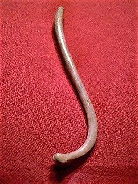 de ce este penisul penisul