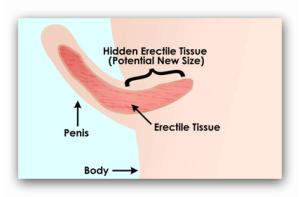 Alungire de penis