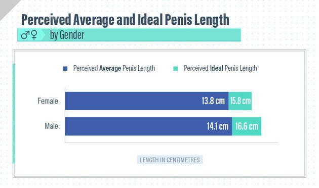 Dimensiunea penisului american