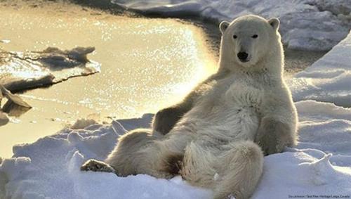 ursul penisului testosteron crescut și erecție