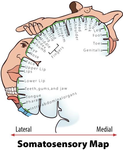 simptome ale disfuncției erectile