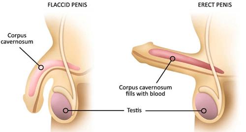 erecția frecventă la bărbați cauzează)