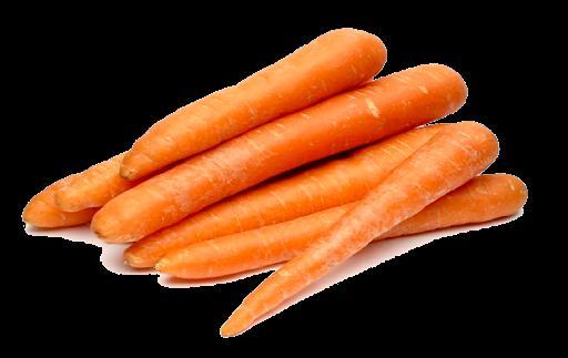 morcov penis
