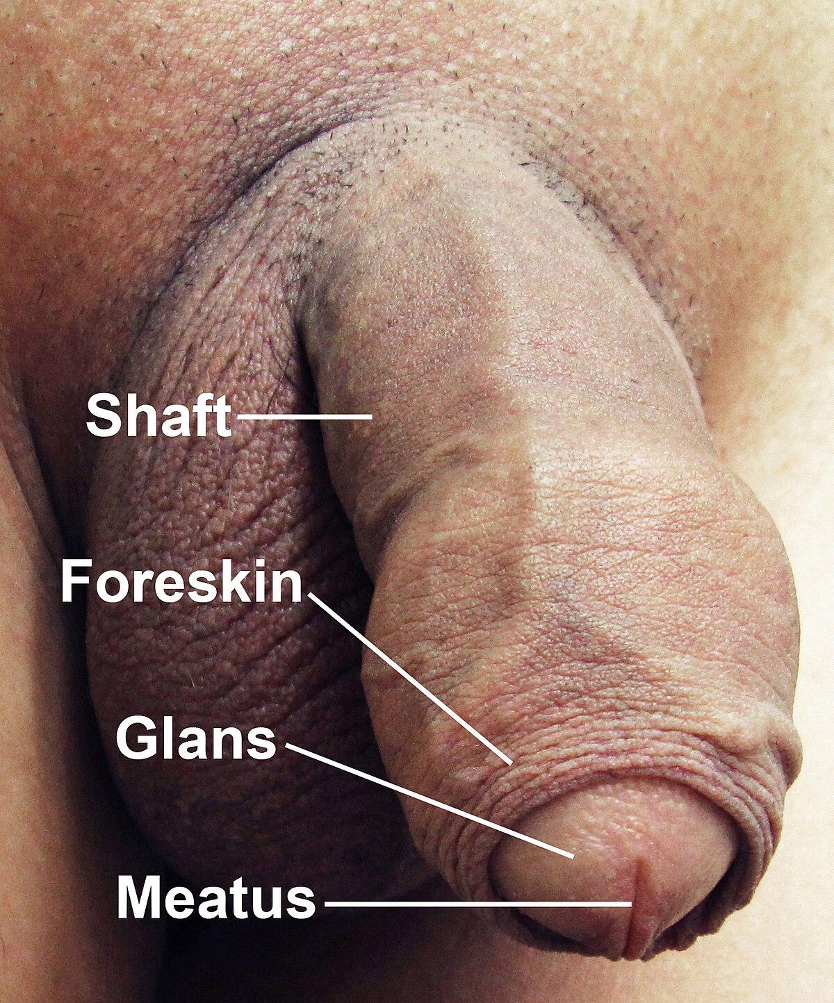 cum se face un penis imens)