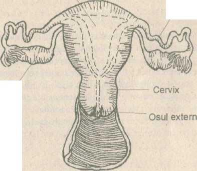 Ce cauzează edemul scrotal și cum trebuie tratat?