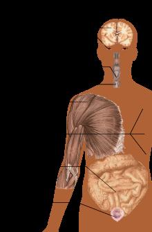 scleroză multiplă și erecție)