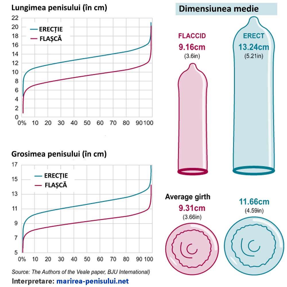 penis normal de dimensiune penis