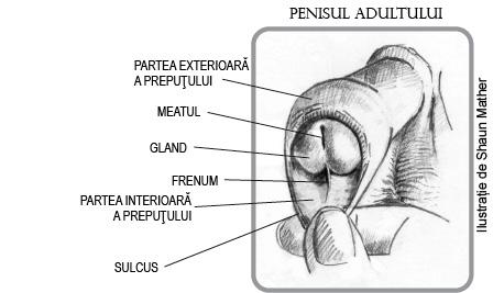 probleme cu penisul