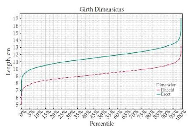 raportul dintre înălțimea și lungimea penisului