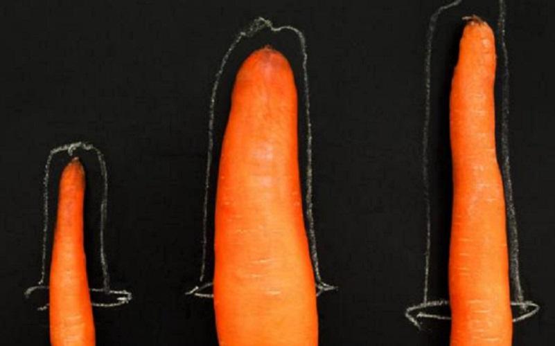 penis în timpul dimensiunii erecției)