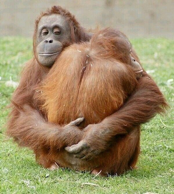 Robot interactiv Orangután 119688 Bluetooth Negru