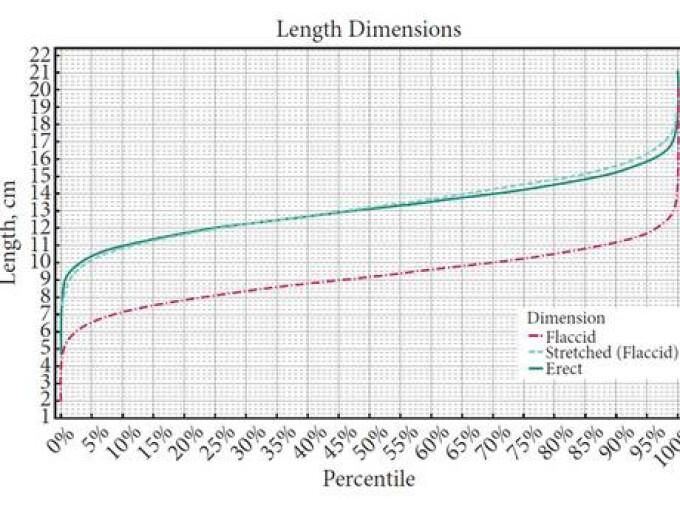 dimensiunea medie a penisului la un bărbat