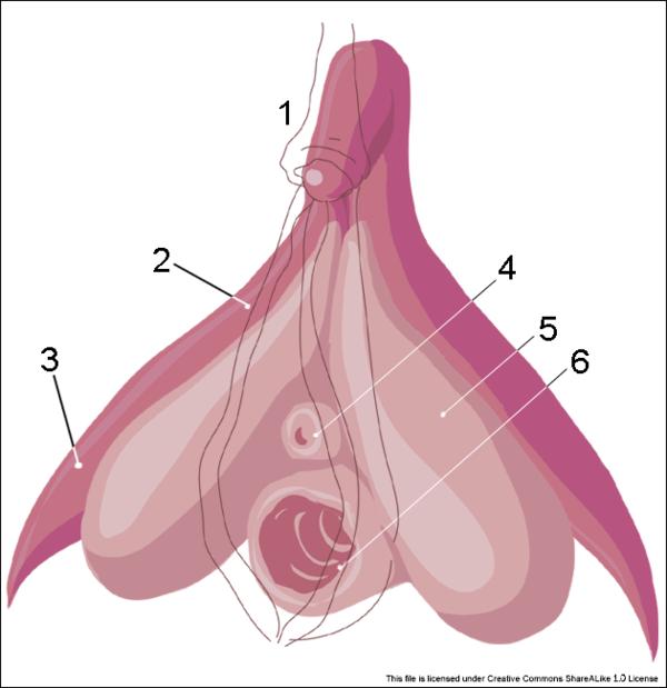 de ce am un penis sensibil unguent pentru răni pe penis
