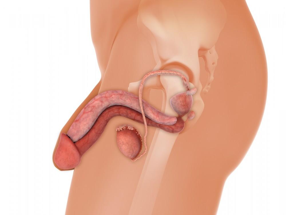 după amputarea penisului